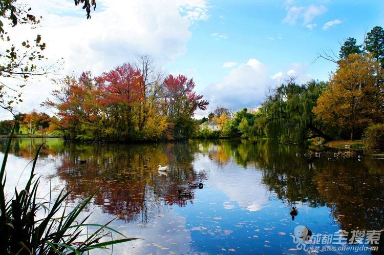 美国校园秋景图片