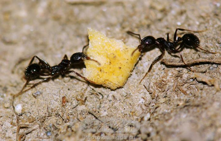 【原创】一只小蚂蚁 - 大松 - 我的博客