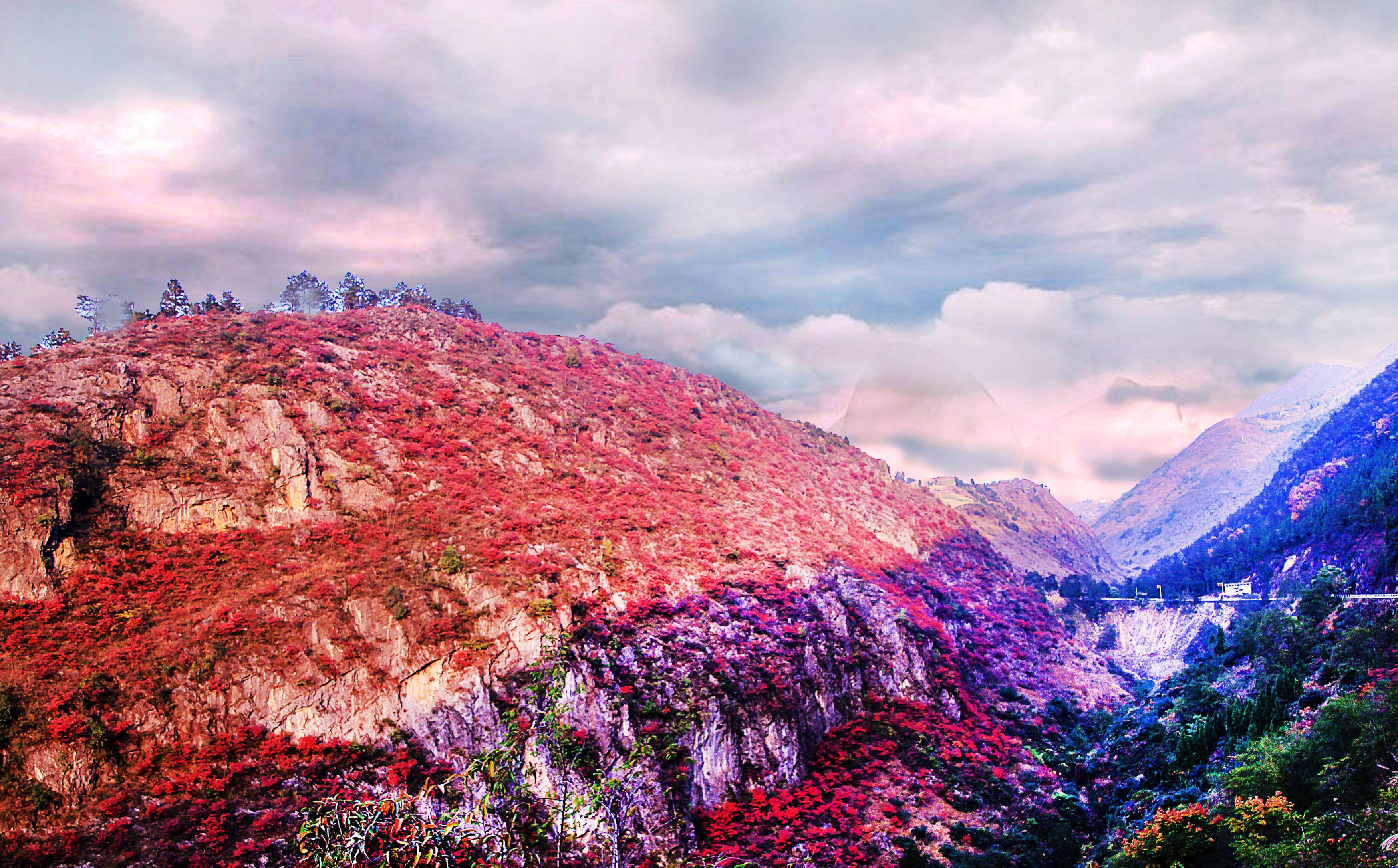 巫山红叶图片_重庆红叶旅游_巫山红叶图片