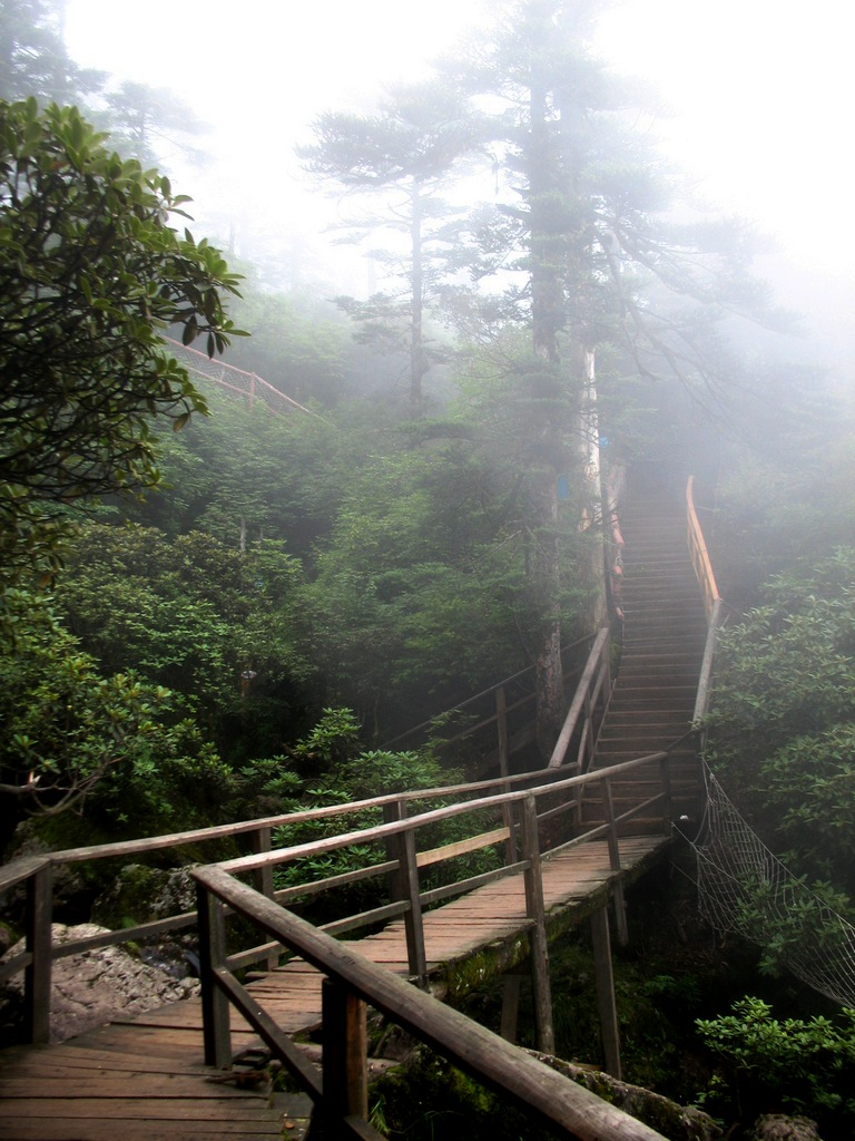 瓦屋山原始森林图片